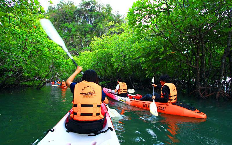 พายเรือ คายัค ผ่านป่าโกงกาง ที่บ่อท่อ