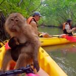 รีวิว พายคายัค ท่าเลน มีลิงด้วย