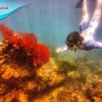 รีวิว ปะการังที่กระบี่ สวย