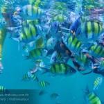 รีวิว เที่ยวกระบี่ ปลาสวยงาม