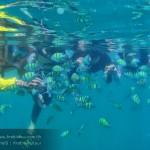 รีวิว กระบี ปลาสวยๆ
