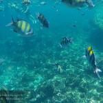 รีวิว ดำน้ำดูปลา กระบี่
