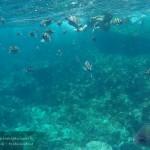รีวิว ทะเลกระบี่ ปลาเยอะ