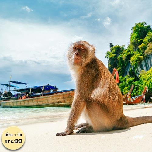 สถานที่เที่ยว กระบี่ ณ อ่าวลิง พีพี