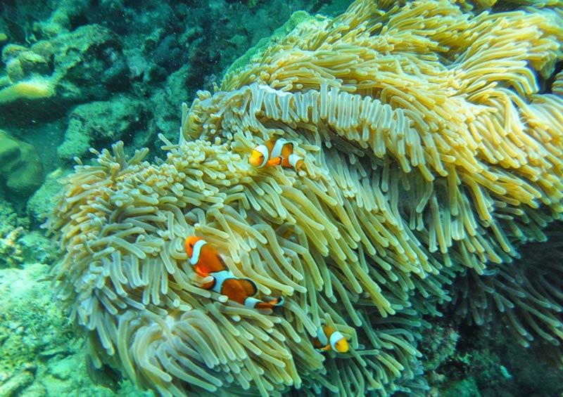 ทัวร์ เกาะห้อง แวะดำน้ำดูนีโม่ ที่เกาะแดง