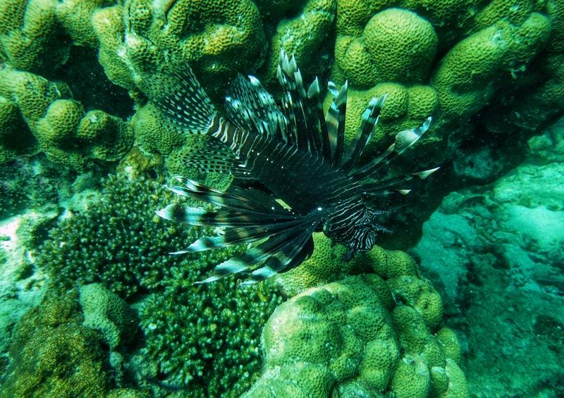 ดำน้ำดูปลาที่เกาะแดง ในทัวร์ เกาะห้อง