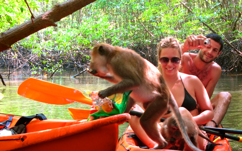 monkey-kayaking-thalane-krabi