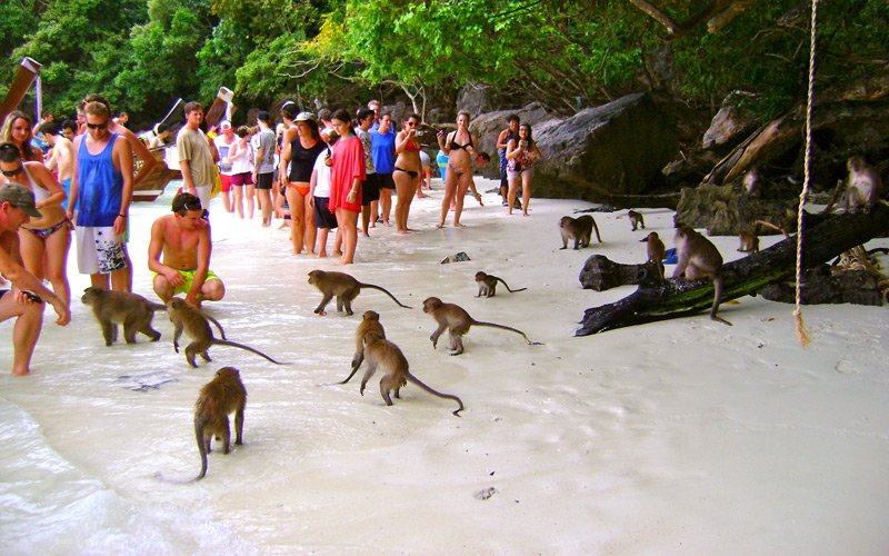 monkey-bay-krabi